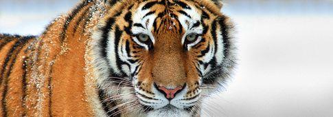 Heijo Shin Dojo - Raduno delle Tigri e dei Tigrotti